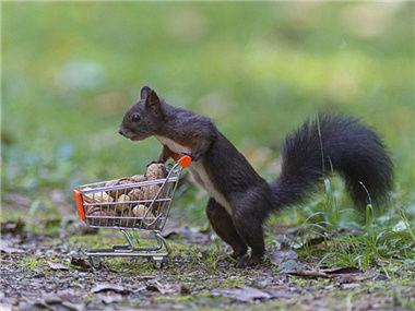 松鼠是如何找到坚果的