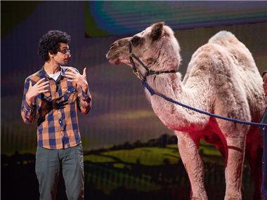 来自北极的骆驼