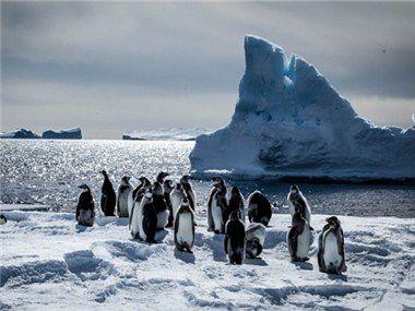 小雪:一只企鹅的故事