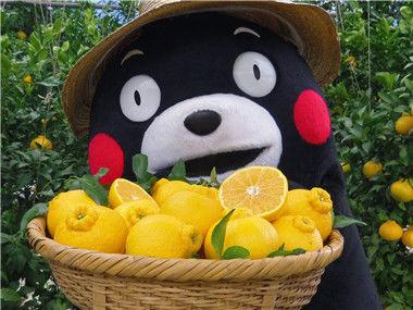 关于熊本熊的十个事实