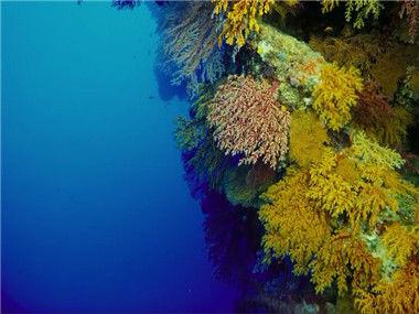【高分纪录片】海底世界