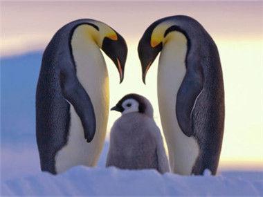 企鹅卧底日记