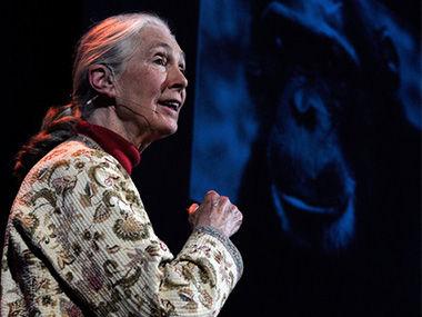 珍·古道尔帮助人与动物共存共处